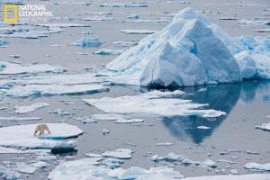 polar_bears_01